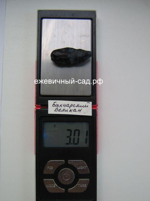 Вес жимолости Бакчарский Великан
